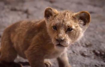 Les bandes-annonces de la semaine : Le roi lion, Fabuleuses, Premières de classe et plus